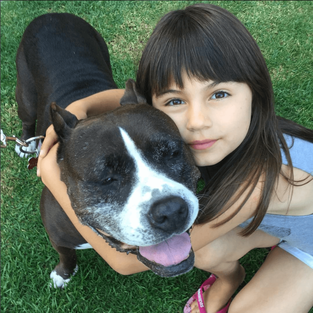 Adopt Olive the Pit Bull in Los Angeles