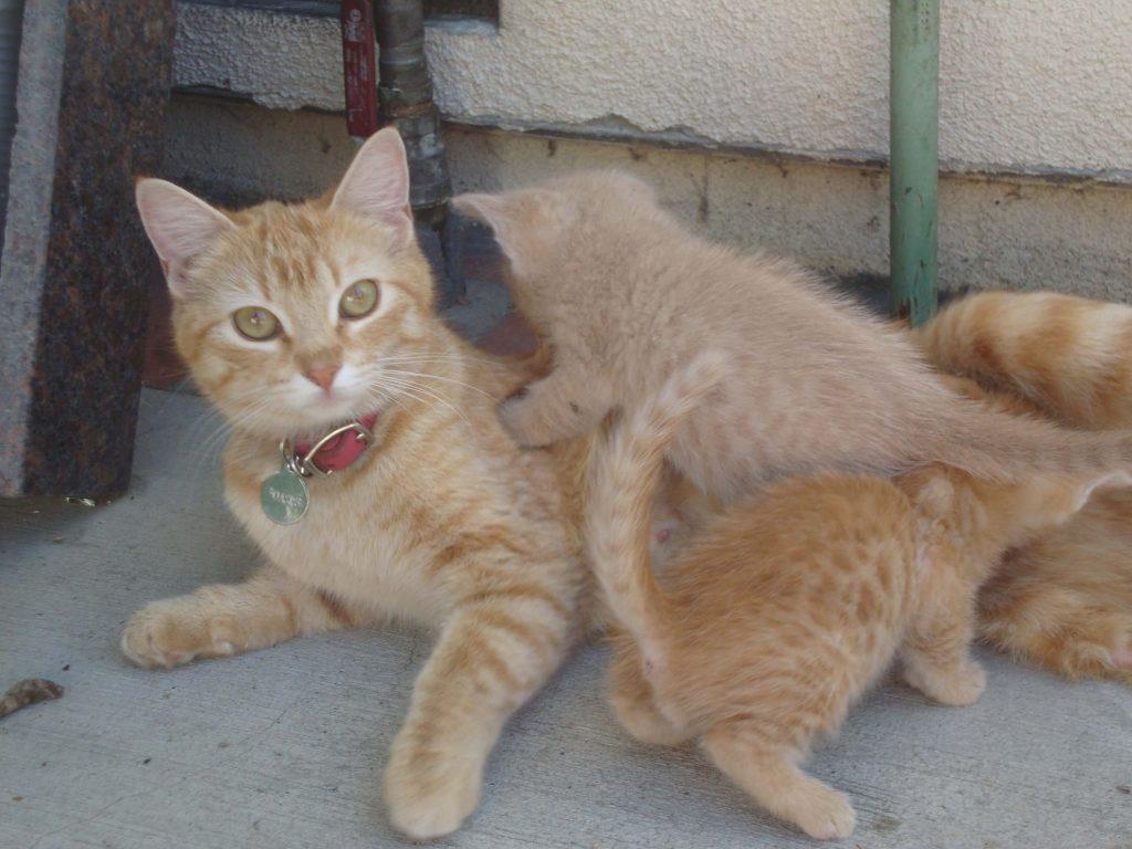 Tripod kittens