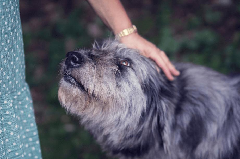 Woman petting dog.
